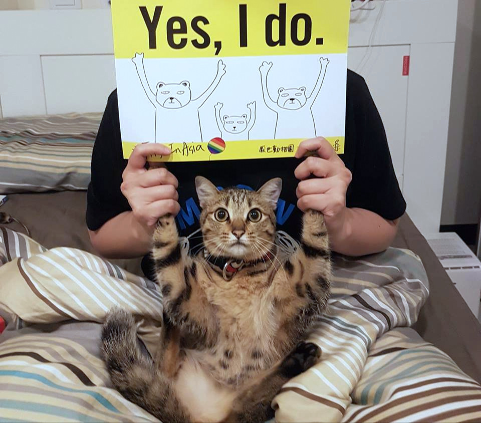 "Woman and cat holding ""Say Yes"" sign"