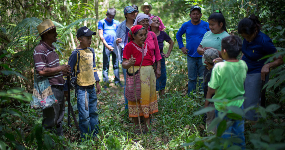 Earth Defenders in Honduras standing in a forest